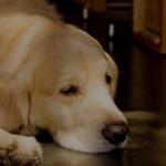 犬ぐったり疲れている元気がない理由原因